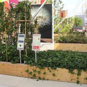 EXPO 2015 - Clusters: Früchte & Gemüse - Hier wächst, was auf den Info-Tafeln erklärt wird/ © Stefan Dömelt/comrhein