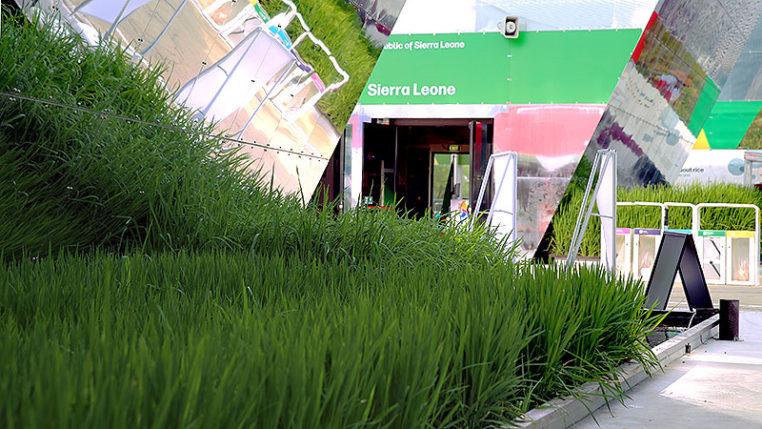 EXPO 2015 - Clusters: Reis - Sierra Leone / © Stefan Dömelt/comrhein