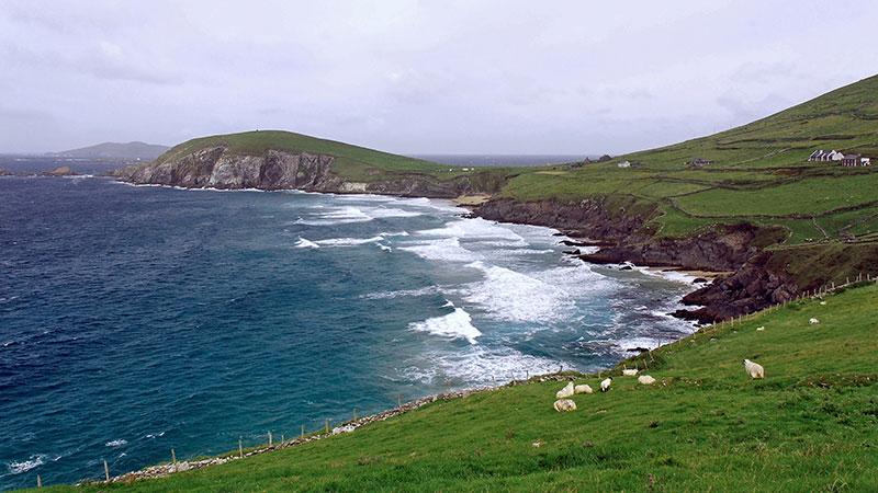 Die irische Landschaft ist bekannt für ihre unendlichen Weiten und das satte Grün. Natürlich dürfen auch die Schafe nicht fehlen. - Foto: Mathias Klingner / pixelio.de